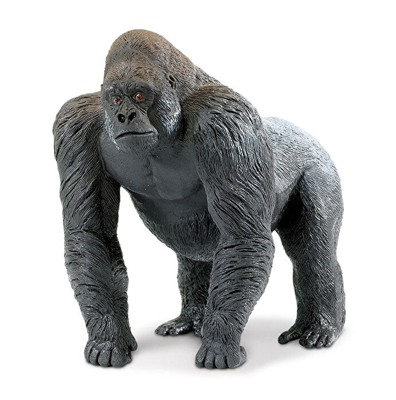 gorilla pierdere în greutate