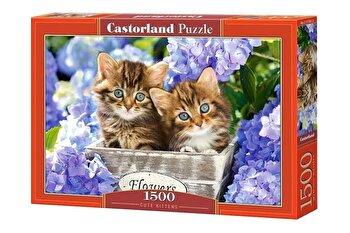 Puzzle Pisicute, 1500 piese de la Castorland