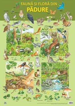 Plansa fauna si flora din padure/Nelson Verlag de la DPH