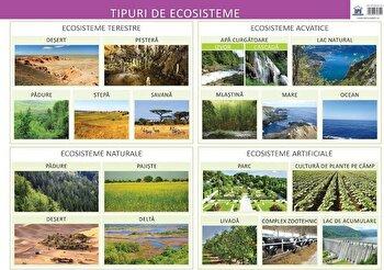 Tipuri de ecosisteme - plansa/Florica Alexandrescu