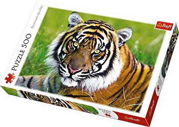 Puzzle Tigru, 500 piese de la Trefl
