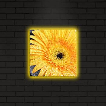 Tablou pe panza iluminat Shining, 239SHN4260, Multicolor de la Shining