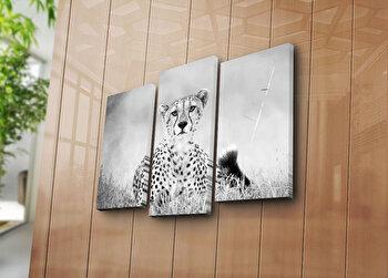 Tablou decorativ pe panza Sightly, 3 Piese, 252SGH1268, Multicolor de la Sightly