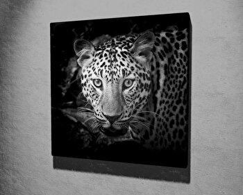 Tablou decorativ pe panza Majestic, 257MJS3255, 45 x 45 cm, Multicolor