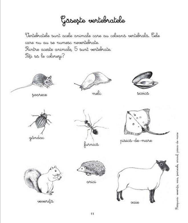 *** - Animale si insecte - Activitatile mele Montessori -
