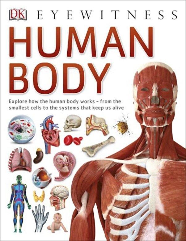 *** - Human Body -