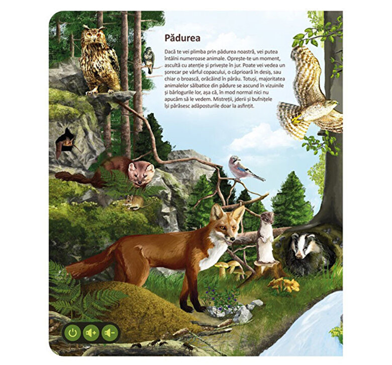 Raspundel Istetel - Carte interactiva Lumea animalelor -