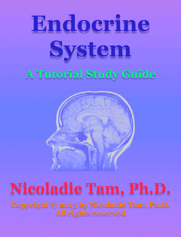 Endocrine System: A Tutorial Study Guide (eBook)