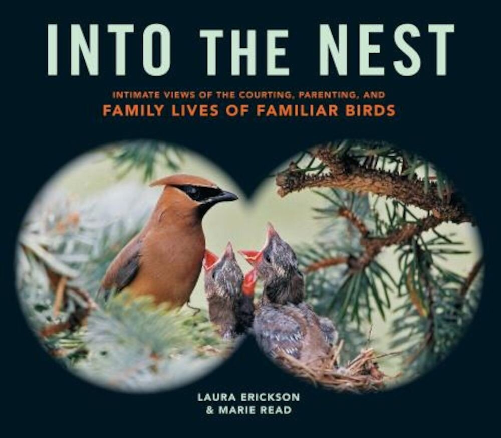 Into the Nest: Intimate Views of the Courting, Parenting, and Family Lives of Familiar Birds, Paperback