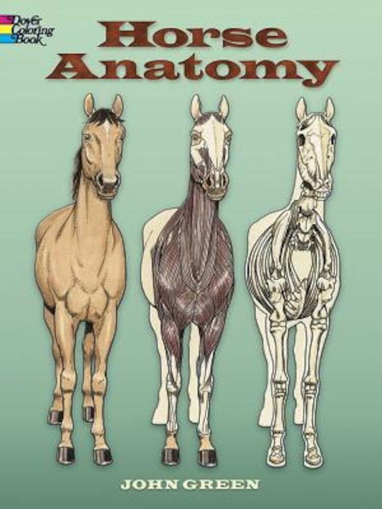 Horse Anatomy, Paperback