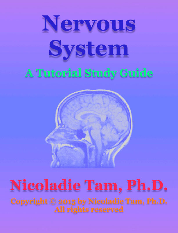 Nervous System: A Tutorial Study Guide (eBook)