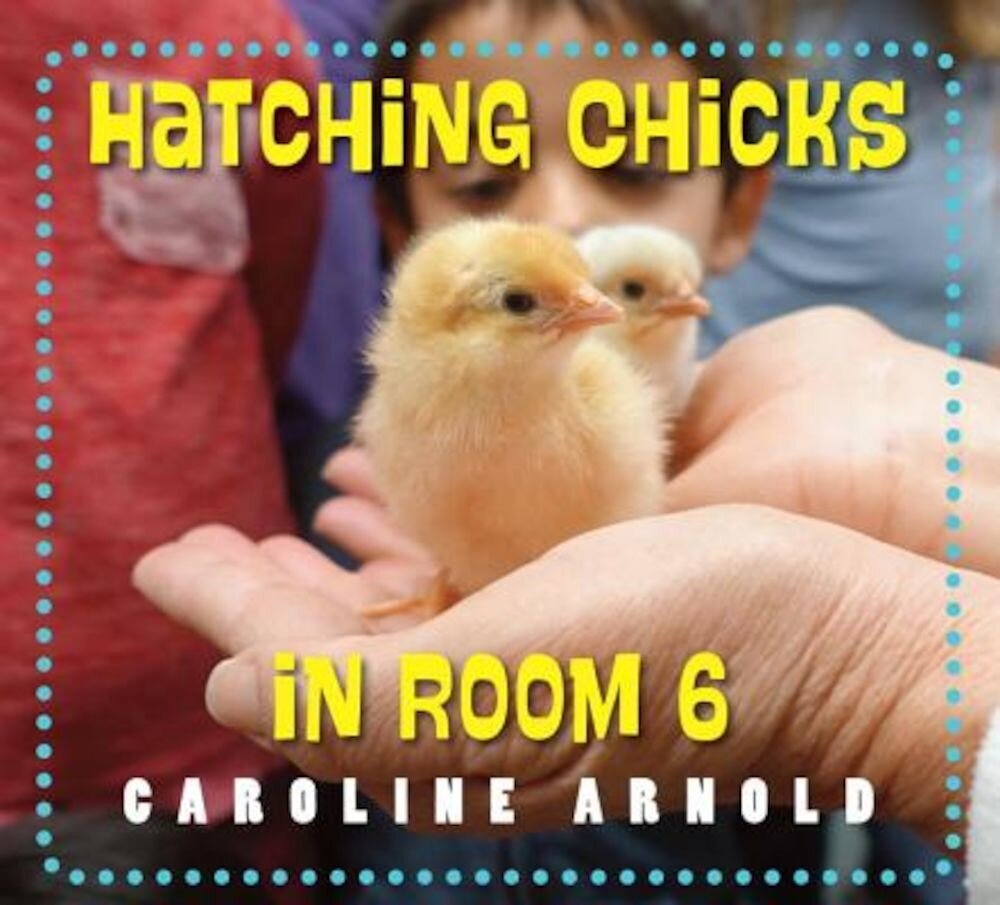 Hatching Chicks in Room 6, Hardcover