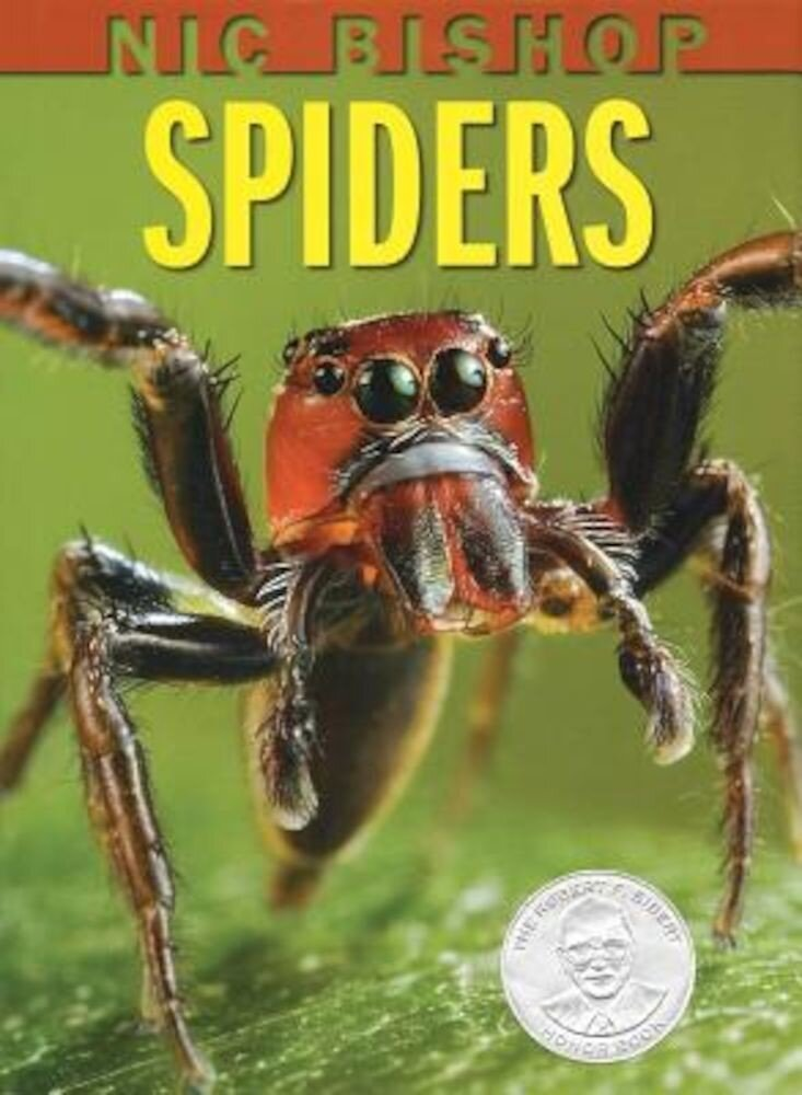 Nic Bishop Spiders, Hardcover