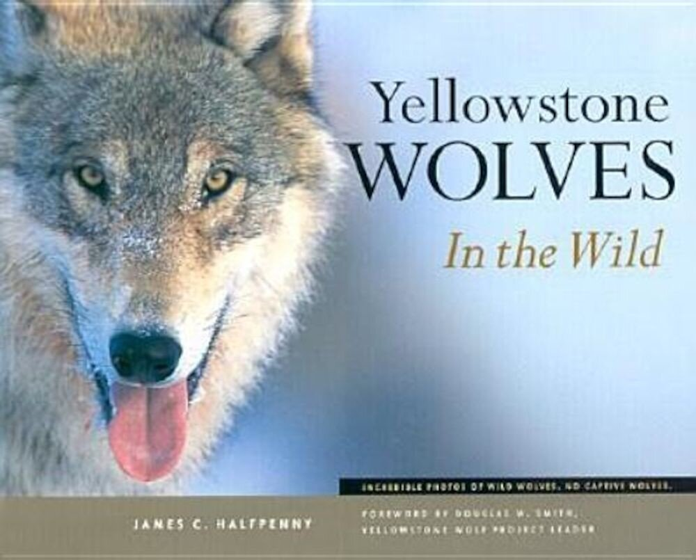 Yellowstone Wolves in the Wild, Paperback