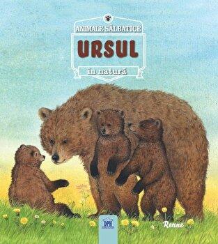 Ursul- animale salbatice in natura/Renne