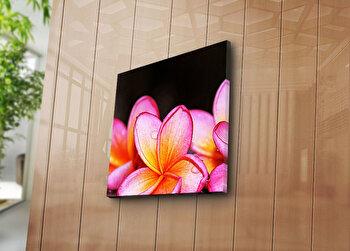 Tablou decorativ Bonanza, 242BNZ1268, 45 x 45 cm, Multicolor