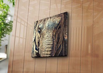 Tablou decorativ pe panza Sightly, 252SGH1203, 45 x 45 cm, Multicolor elefant